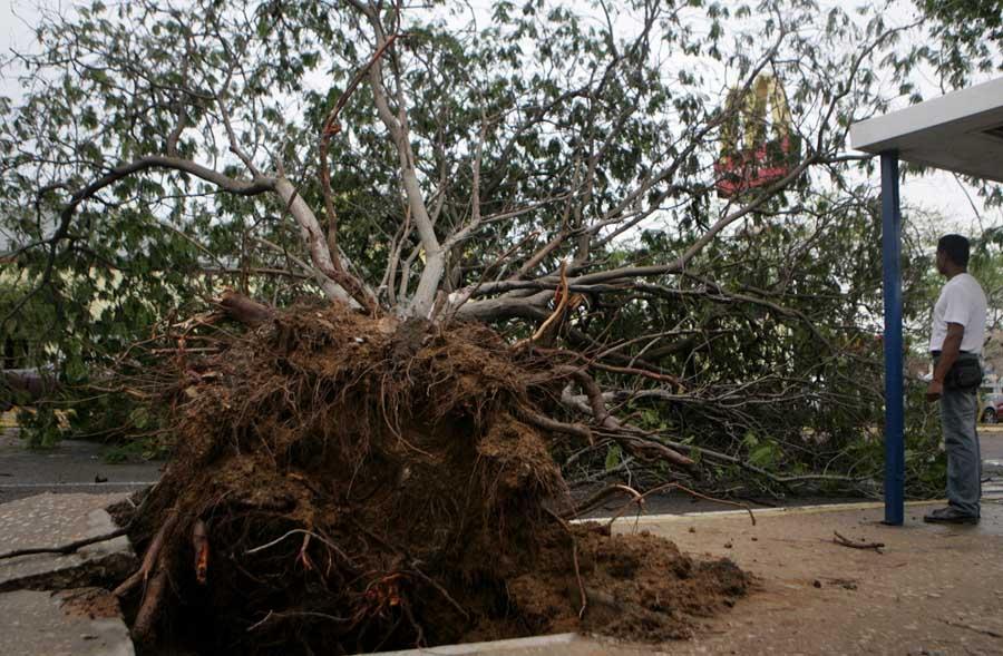 Maracaibo, Venezuela, 19/09/2015. Arboles caidos y varias zonas sin servicio electrico es la principal afectacion que reportaron los servicios de emergencia del Zulia tras el aguacero y vientos huracanados que azoto a varios municipios.  Pasadas las 3.00 de la madrugada, empezo a llover sobre varios municipios de la costa oriental y occidental del Lago de Maracaibo, precipitacion que estuvo acompanada por vientos huracanados e intensas descargas electricas. En la foto: En la avenida Padilla 06 arboles se derrumbaron durante el aguacero.