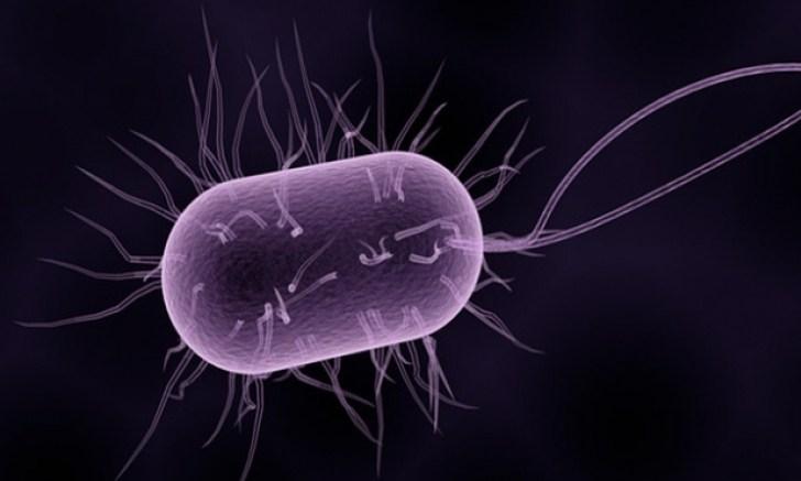 bacteria super gonorrea