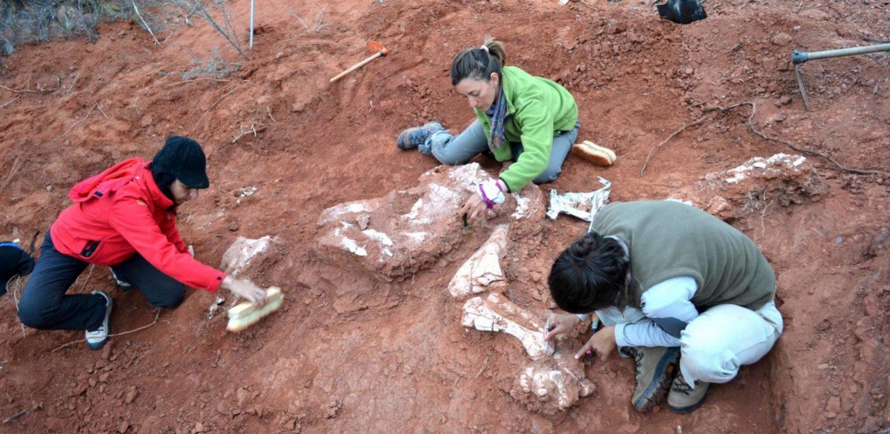 descubren nuevo fosil de dinosaurio en argentina