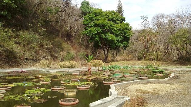 jardin botanico caracas