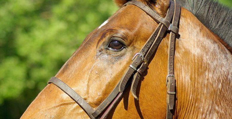 caballo-Maracay