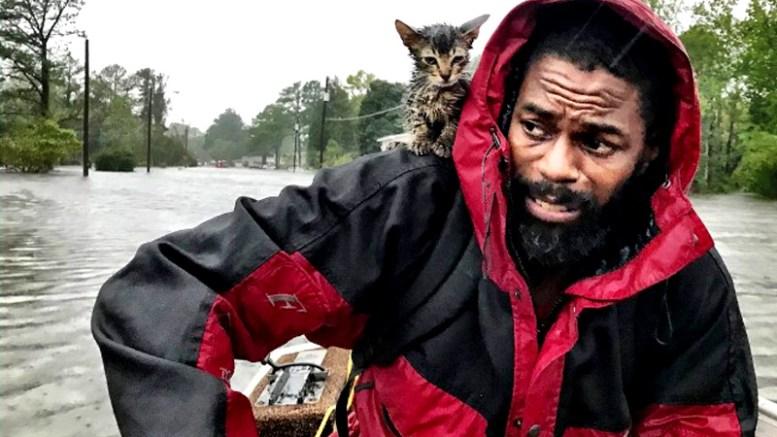 gato sobreviviente florence