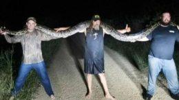 Capturan-enorme-víbora-pitón-en-pantano