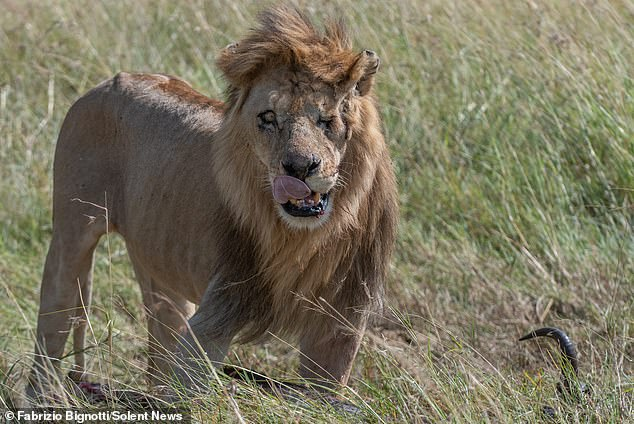 leon tuerto