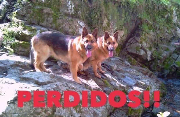 perros perdidos