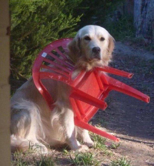 perro y silla