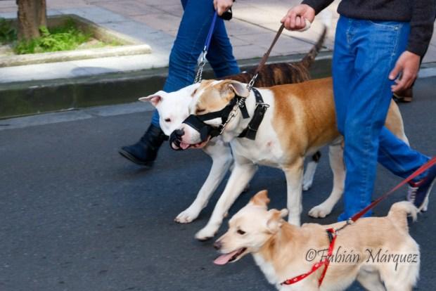 marcha perros peligrosos-5