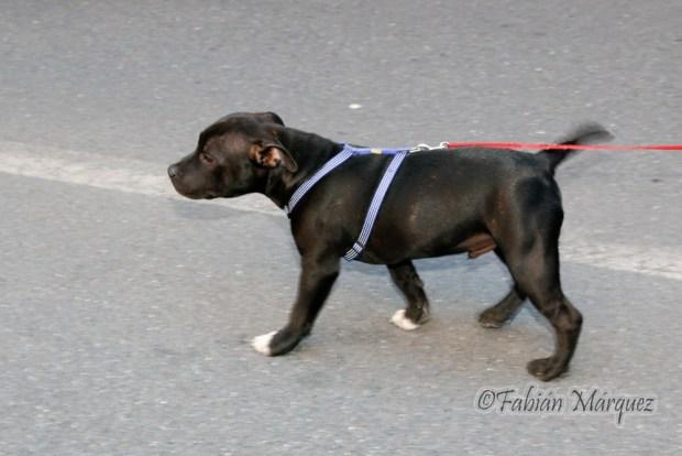 marcha perros peligrosos-7