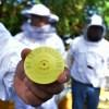 Gobierno del Estado exhorta a apicultores a realizar el areteo de colmenas.