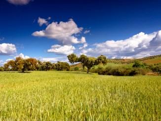 El DOE publica la convocatoria de ayudas de implantación de sistemas agroforestales en terrenos de titularidad privada