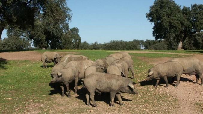 El-director-de-la-PAC-avanza-que-en-2023-las-ganaderias-de-porcino-y-equino-que-no-cuenten-con-pago-basico-podran-acceder-a-la-Reserva-Nacional