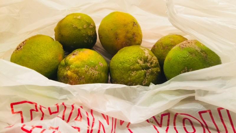 La llegada de los limones