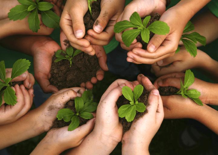 Las tres C en la educación medioambiental
