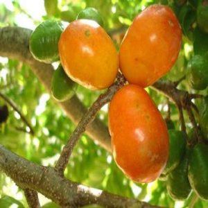 13464-Cajá-Uma-Fruta-Exótica-1-600x600-300x300