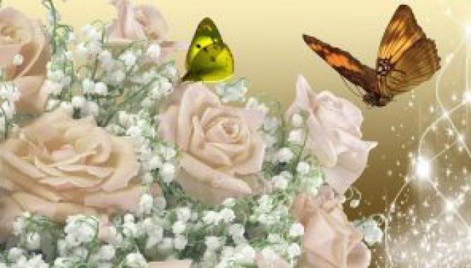 361195__apricot-roses-shine_p