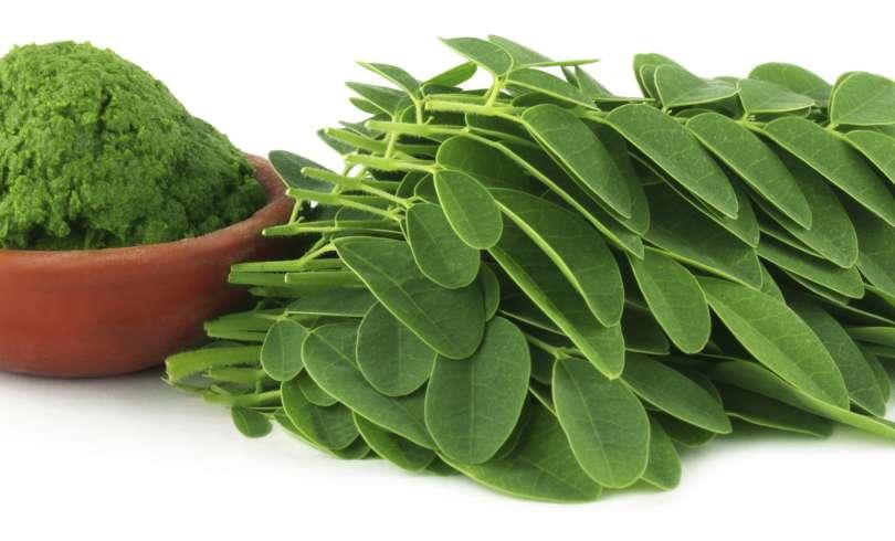 Trate artrite, fibromialgia e hepatite com essa planta milagrosa