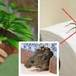 Se você tem essa planta em sua casa, você nunca verá ratos, aranhas e outros insetos novamente!