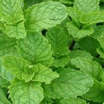 Descubra por que esta erva é a mais poderosa, para limpar o fígado gordo. (Receita)
