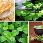 4 plantas que protegem o cérebro de Alzheimer, ansiedade, depressão e mais!