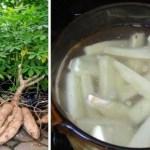 Você sabia que esta planta indígena exótica é uma cura potencial para câncer e infertilidade! Saiba mais!
