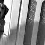 Família adotou um cachorro que não dormia – quando o gravaram descobriram algo emocionante!