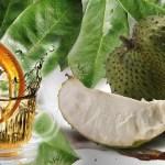 Veja os benefícios do poderoso chá das folhas de graviola