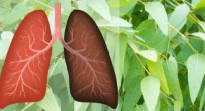 9-plants-herbs-that-repair-lung-damage-combat-infections-and-boost-lung-health
