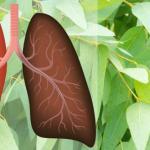 9 plantas e ervas poderosas que tratam infecções e limpam os pulmões