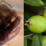 Este método de usar folhas de goiabeira é eficaz para reduzir a perda de cabelo e aumentar seu crescimento em 100%