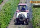 Se busca Cubrir 50 puestos de trabajo como operarios Agrícola en Sevilla.