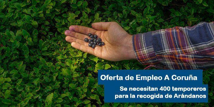 Oferta de Empleo en A Coruña para la recogida de Arándanos