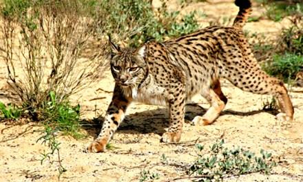 El Parque Natural Sierra de Andújar reclama más financiación y cuidados
