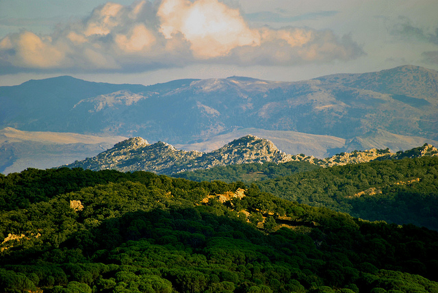 Ecologistas denuncian la pasividad de la junta Rectora de Sierra de Grazalema