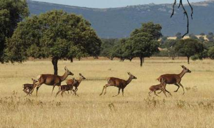 Castilla-La Mancha reclama el control de sus Parques Nacionales