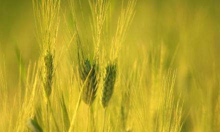 Castilla-La Mancha sustituye las espigas por las Estrellas Verdes