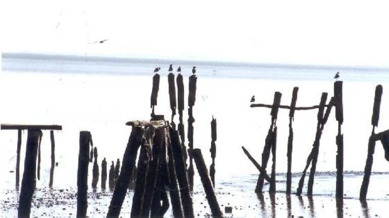 La UNESCO adquiere el control del agua de Doñana