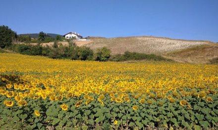 El turismo rural aumenta en España durante el mes de mayo