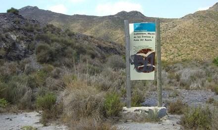 Ruta Guiada en Calblanque: en busca de los animales