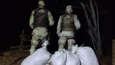 Photo of Cipe encontra 50kg de maconha enterrados em quintal de casa na Bahia