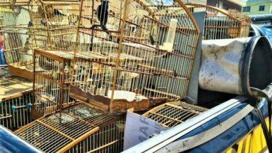 Photo of Região: Seis pessoas são denunciadas por integrarem associação criminosa especializada em tráfico de animais silvestres