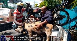 policia-apresa-dos-con-cerdo-robado-en-villa-riva