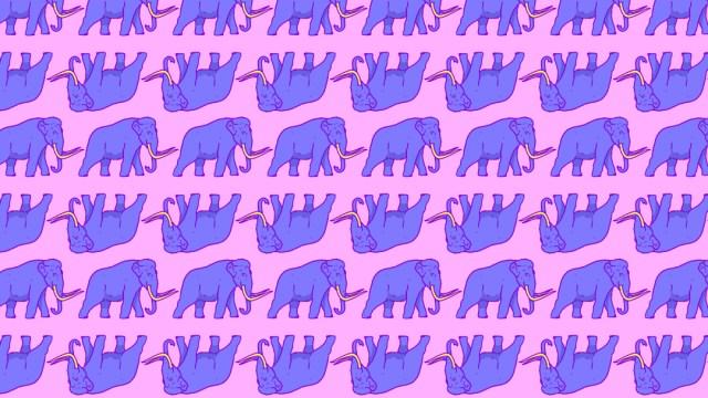 Reto visual: encuentras los dos elefantes entre los mamuts, ilustración