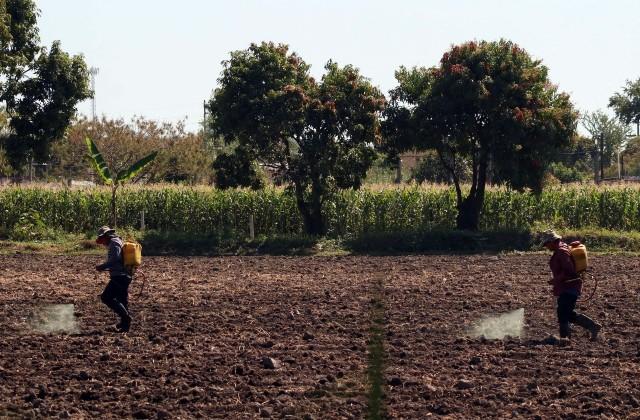Requisitos para mexicanos que quieren ser trabajadores agrícolas en Estados Unidos