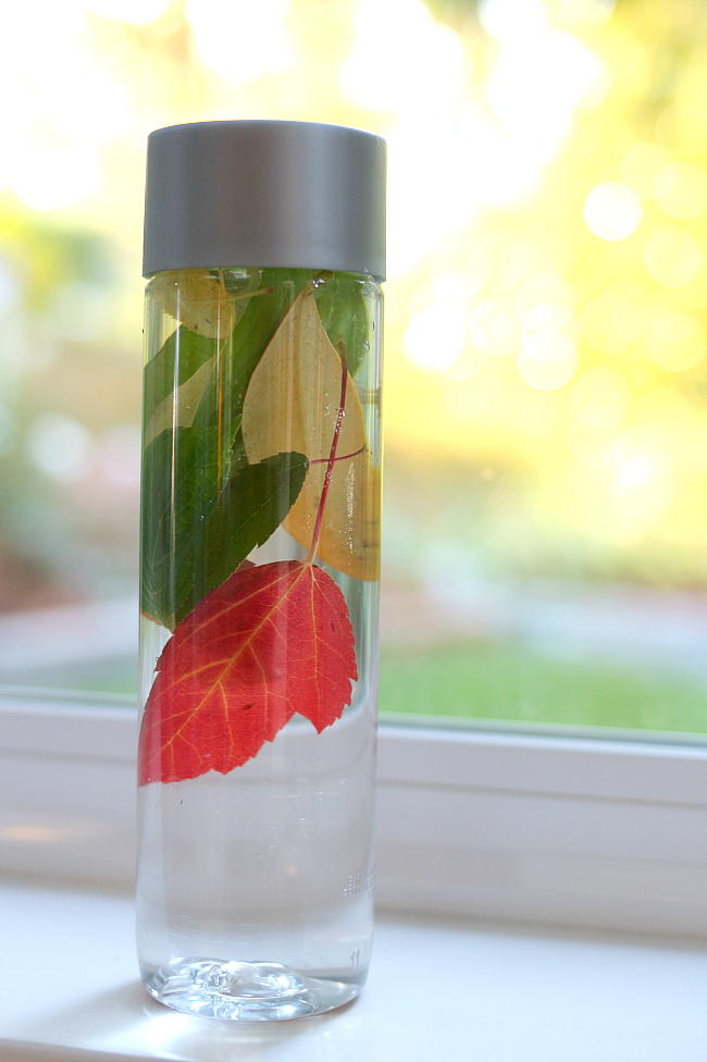 Preschool Science  Fall Nature Bottle  No Time For Flash