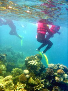 Snorkelers standing on, and damaging, coral