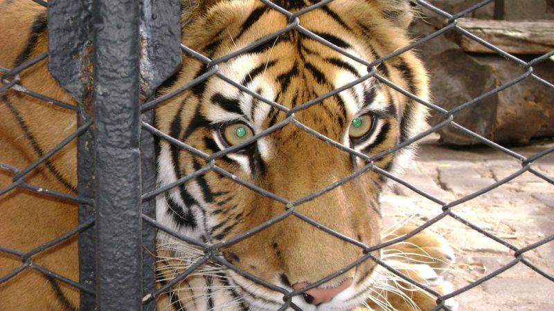 Agencias del Reino Unido dejan de vender boletos para atracciones con animales