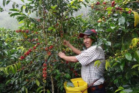 Café de Putina Punco gana premio mundial al mejor café en feria de EEUU