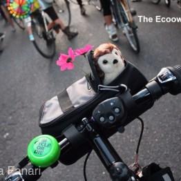 Gufi ciclisti