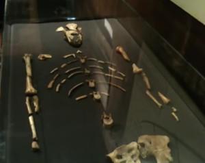 Australopiteco Lucy immagini fossile nel museo e video