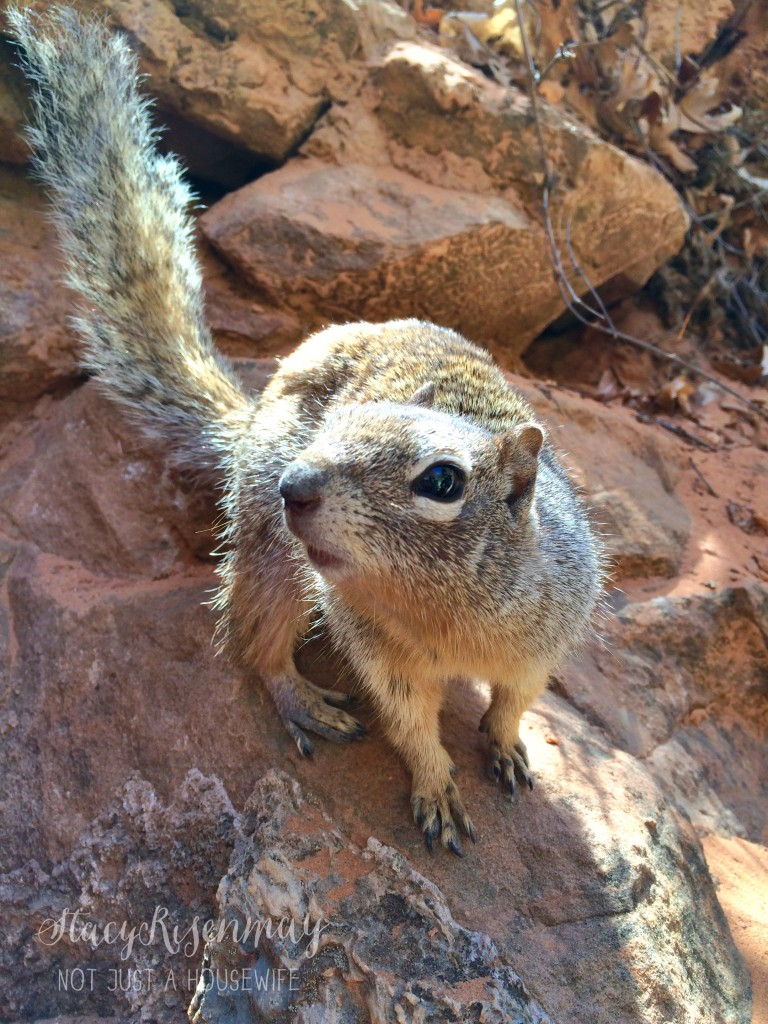 Lunch Zion National Park